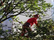 Klettergurt Für Baumpflege : Martens baumpflege startseite